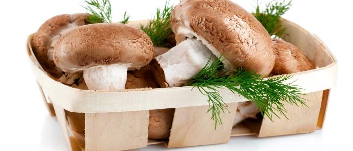 Один из основных источников витамина РР - грибы