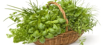 Восполнить запасы рибофлавина в организме можно из свежей зелени