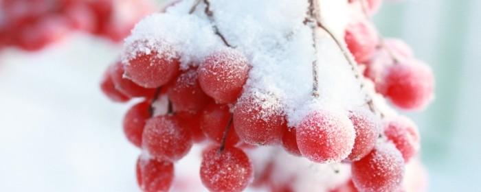 Зимняя рябина и замороженные летние ягоды помогут побороть дефицит витаминов зимой